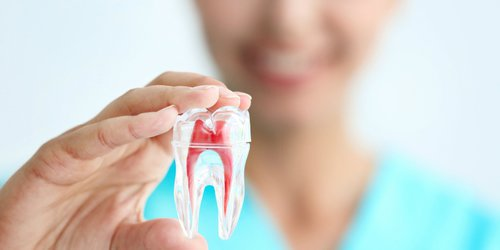 the image of somone holding a replica of a tooth